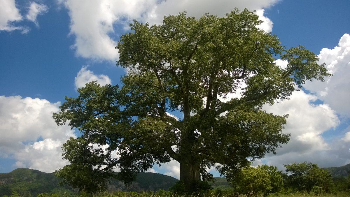 Over de zin en onzin rond spiritualiteit