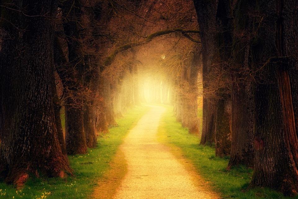 Waarom het niet erg is te verdwalen en hoe je je eigen pad vindt